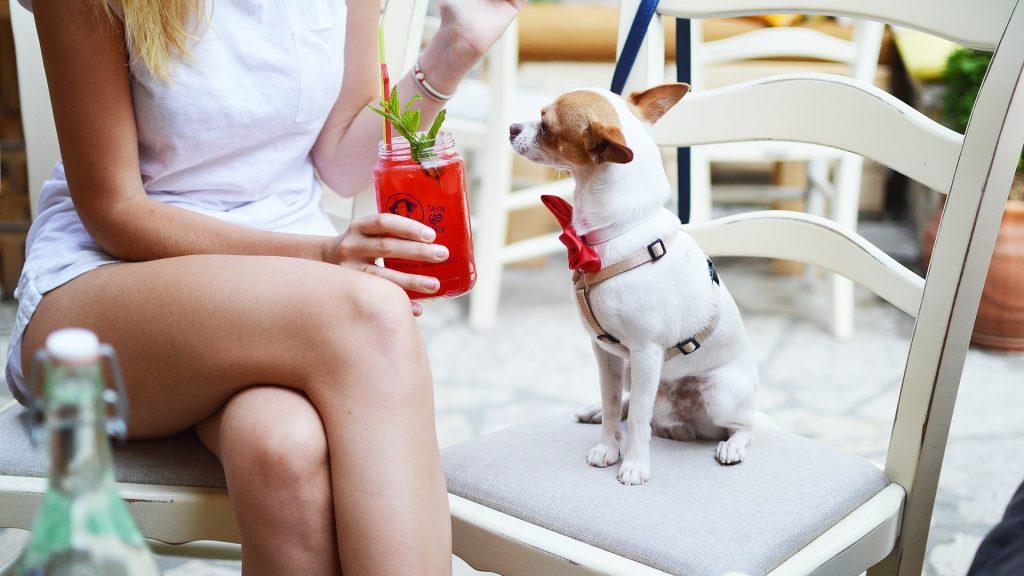 Ingridients For Skinny Salty Dog